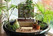 Zen Succulent arrangement