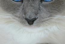 Animals - Cats/Eyes / by Jan Vafa