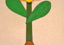 Prv - stavba rostlin