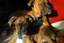 dogs / by Kaytie Prater