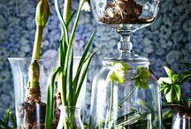 Compositions florales..bulbes dans tous ses états !!
