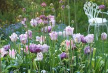Roses & Tulips / Roses & Tulips are among our favourite garden plants – and deservedly so! Plant bulbs in autumn for a show of spring flowers #GreenThumb