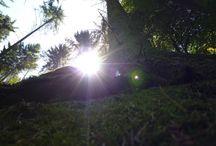 Natur er-LEBEN / Wenn ich durch die Natur streife, dann bieten sich immer wieder wundervolle Motive! Ich versuche Momente IN der Natur  einzufangen...