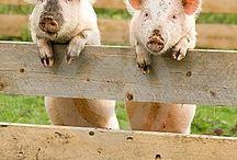 ~*~ The Farm Life / The Farm Life. Enjoy! / by Kellena M Harrington