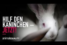 Gegen Käfighaltung von Kaninchen / Unter skandalösen Bdingungen vegetieren Kaninchen in Mastbetrieben. Das EU Parlament kann das am 14.3. ändern! Bitte helfen sie den armen Kreaturen und unterschrieben Sie die Petition! https://www.change.org/