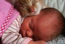 babák és cicák