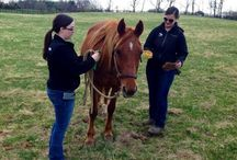 Horse Rescue & Adoption / Information about equine rescue and adoption.