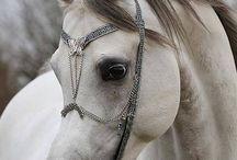 Horse bucket list / by Nicole Franklin
