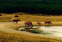 Fotos / Paisajes, caballos