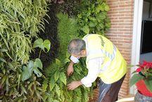 VertiCal GarDen, Maintenance. Spain. / Alijardin, como buenos entendidos de los diferentes sistemas constructivos de jardines verticales, tanto en su diseño como en su instalación, y con la amplia experiencia en jardinería vertical que nos avala y en unión de un equipo técnico y