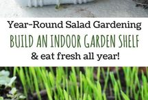 Indoor Salad Garden