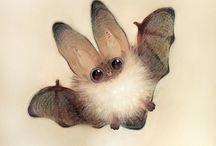 netopýři