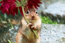 little chipmunck's umbrella