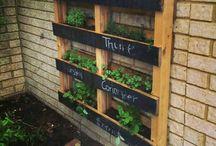 Ideas for herbs