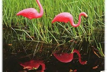 Flamingo's  / by Bridgette Smith