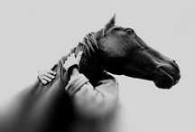 Equine moments / gentle giants / by Theresa L