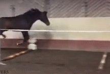 horse gifs