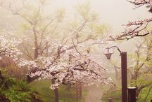 srs // moonlight garden
