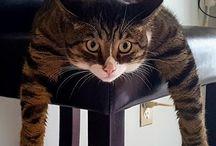 Super kočky