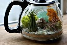 akvarium v nadobe