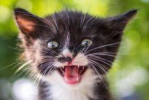 Chats et chiens mignons Quand je sais que je suis en week-end de 3 jours