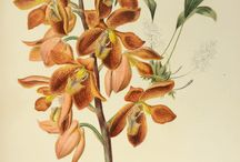 Flora - Natural History engravings / A selection of our finest books and engravings on the theme of Natural History.