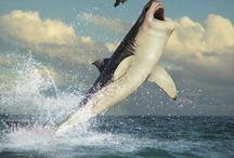Animais marinhos uns aparenta ser inofensivos e outros ajustadores