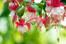 Фоны цветочные / Цветочные,ситцевые