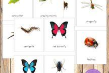 Homeschool (bugs)
