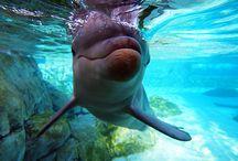 underwater world / by Leslie