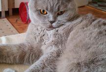 My beauty Lilla the cat