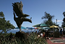 Nepenthe, Big Sur, CA / One of my Favorite Places on the Planet!!!