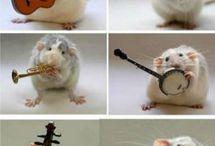 Ratinhos & mouse og mus