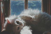 kitts