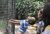 Bandung Zoo 2014 / At Kebun Binatang Taman Sari Bandung 2014/10/16
