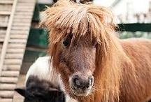 Horses in Minature