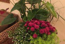 Garden surprise
