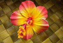 Tropical accessories / by Virginia Hasting