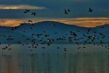 Kuşlar (Birds) / Çekimler bana aittir...