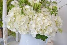 Flowers / by Tami Nichols Floyd