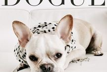DOGUE / vogue dogs