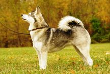Dogs Pictures and Wallpapers