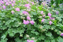 tuinplanten / beplanting apm