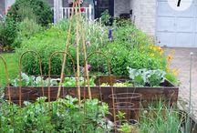 Veggie Garden - Front yard
