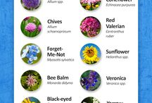 Butterfly Gardens and Gardening / Information about creating the perfect butterfly garden from plants to setup ideas.