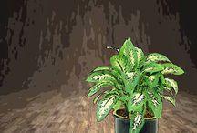 Plants /sleep / clean air