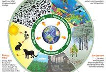 Geology & Ecology