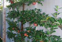 сад плодовый