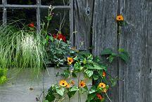 Creating Outdoors / by Karen's Treasures
