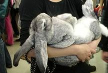Adorable Bunnies / by All God's Creatures Pet Services